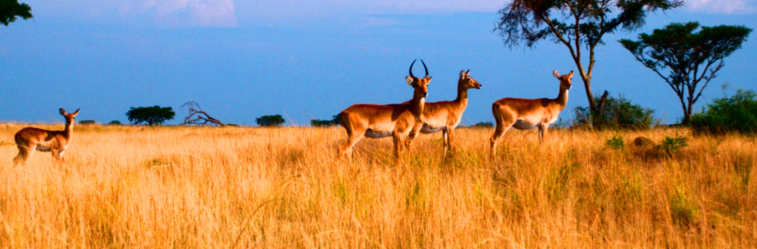 Two days Tarangire and Lake Manyara national parks