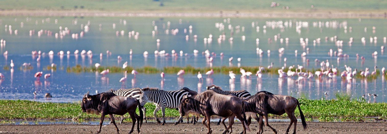 8 Days Safari Lake Manyara, Serengeti Plains, Ngorongoro, Tarangire & Local Tribes Visit