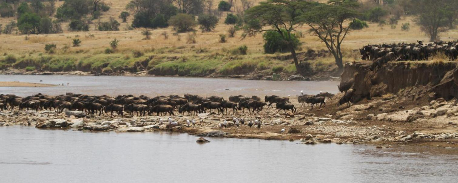 4 Days Fly-in and fly-out Mara River crossing